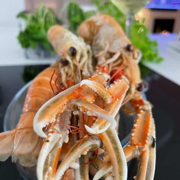 Whole Langoustine | Amity Fish Company