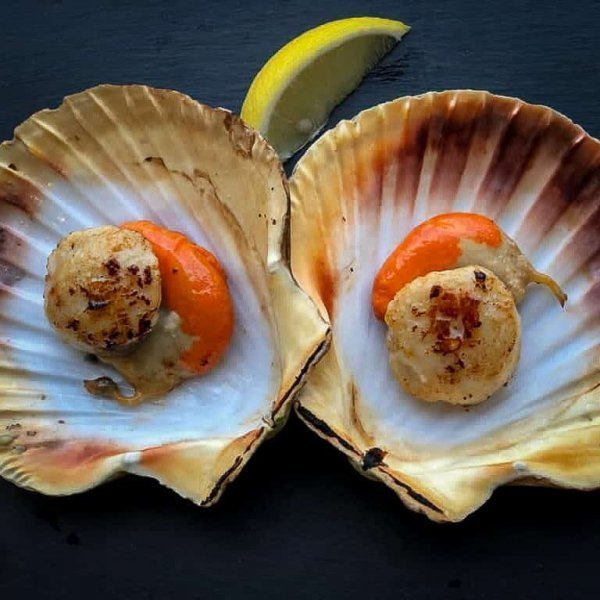 Half Shell Scallops | Amity Fish Company