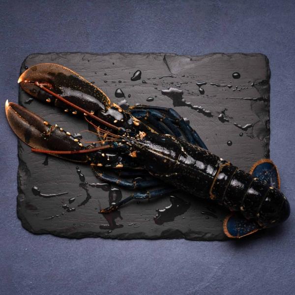 Lobster-1